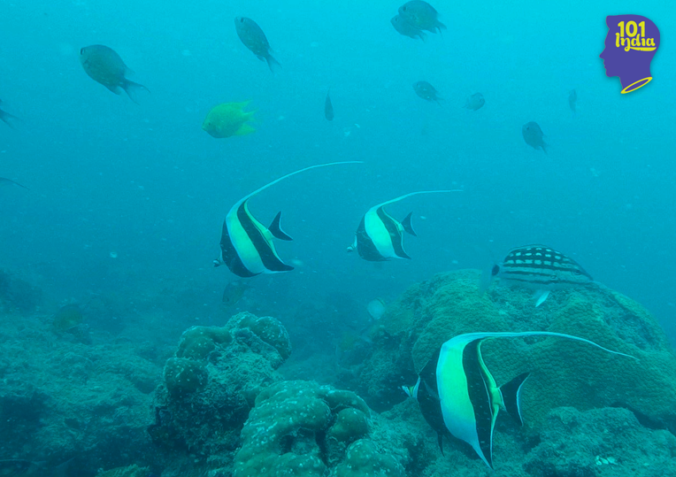 Maybe Butterfly fish. Image credit: Sahil Lokhandwala