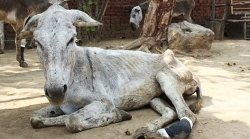 A Date With The Harrisons - Delhi's Donkey Health Care Crusaders