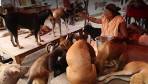 The Dog Lady Of Delhi | 101 Heartland